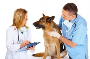 come diventare assistente veterinario comportamentalista