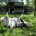 Come Aprire un Allevamento di Cani: i costi e guadagni