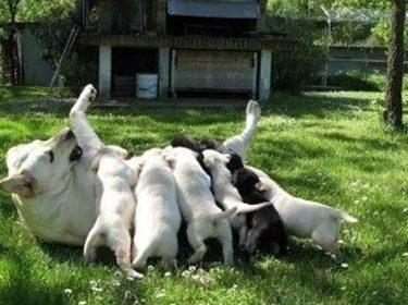 Come Allevare Cani