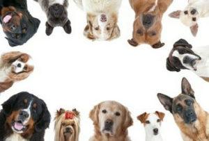 Come Aprire un Allevamento di Cani