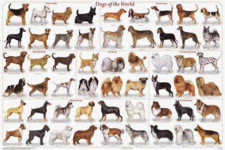 Come Aprire un Allevamento di Cani con costi e guadagni