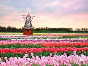 Come imparare l'olandese da soli da casa